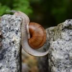 snail-1447233_1920