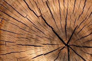 lâcher prise et équilibrez l'élément bois