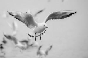 seagull-271103_1920
